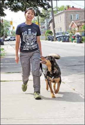 How To Teach Loose Leash Walking To Your Dog Dog Training