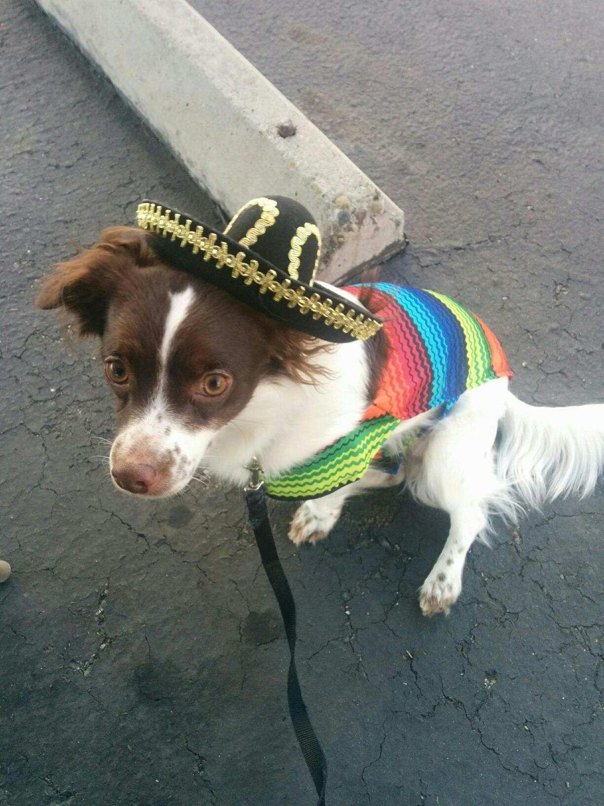 Happy Cinco de Mayo! OC http://ift.tt/2q8VxRf
