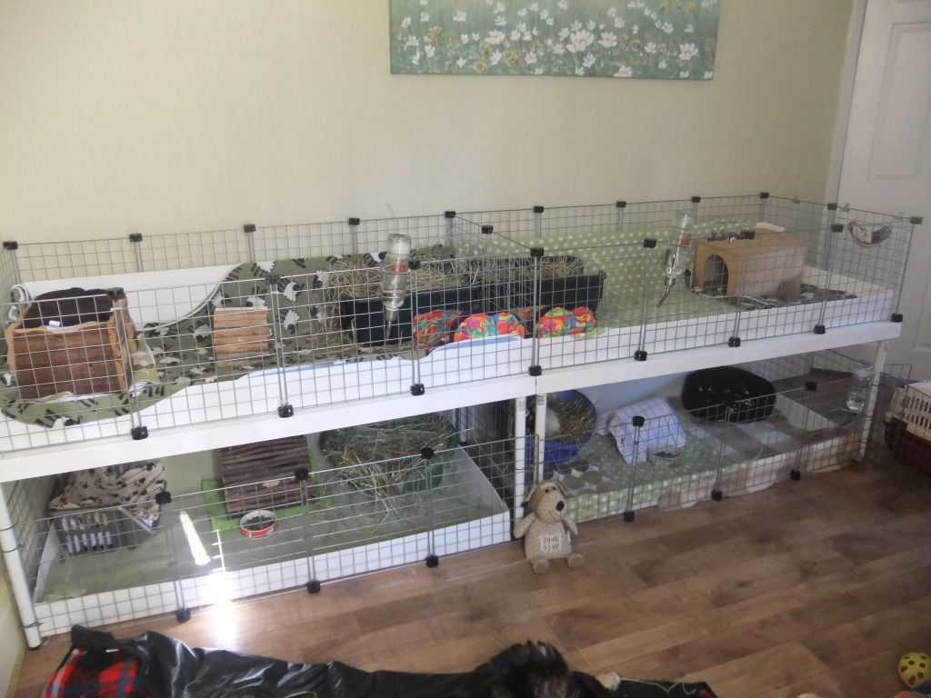 Homemade guinea pig cages member gallery c c cages for Guinea pig cage for 3