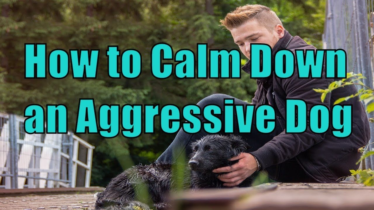 How to calm down a dog showing aggression towards people