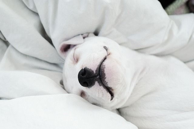Pin By Kristen Strange On Dog Love With Images Puppies Baby Dogs I Love Dogs