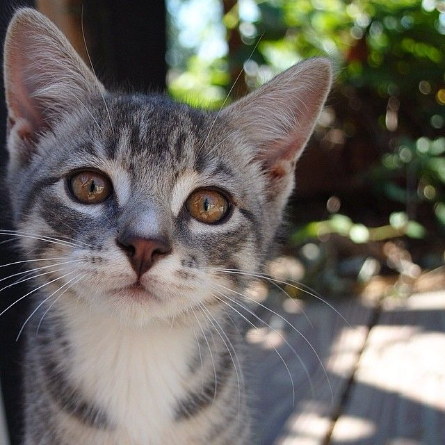 2_gray_kittens