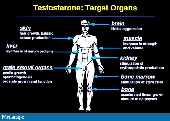 Pin on All Natural Testosterone Optimization