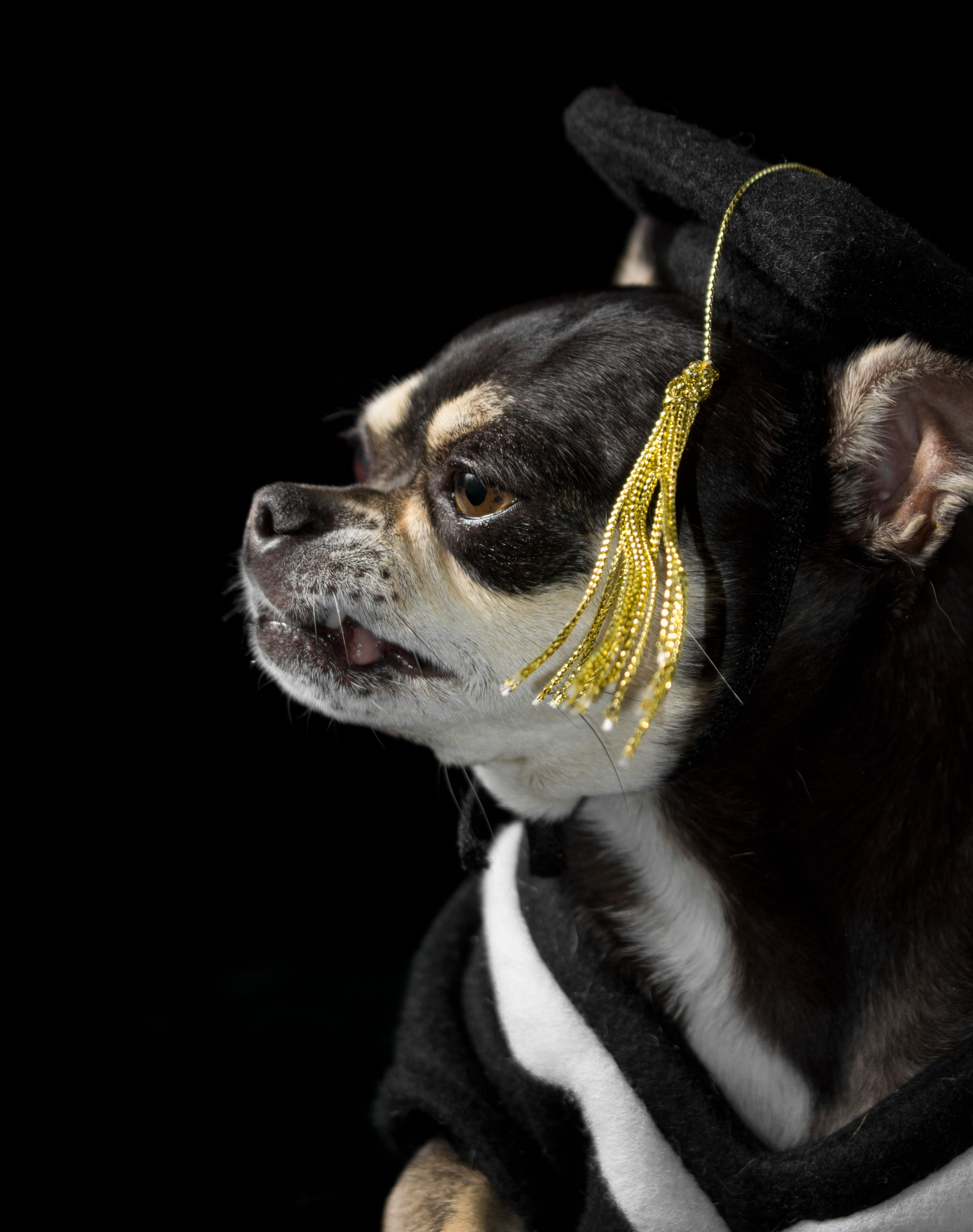 Graduation Dog | Dogs | Pinterest | Dog