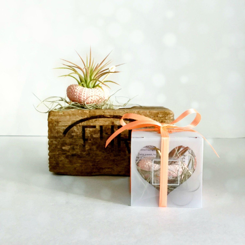 Set of 50 sea urchin air plants favors beach wedding favors -beach ...