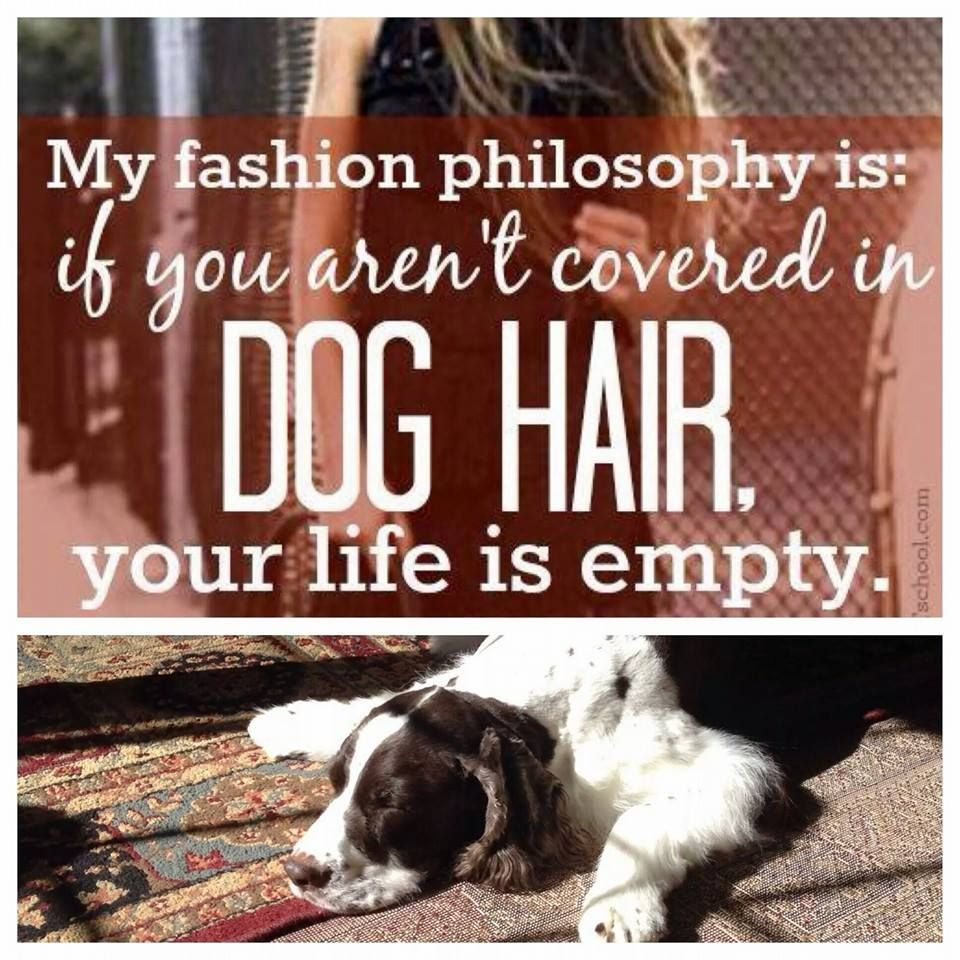 My Fashion Philosophy Is If You Aren T Covered In Dog Hair Your