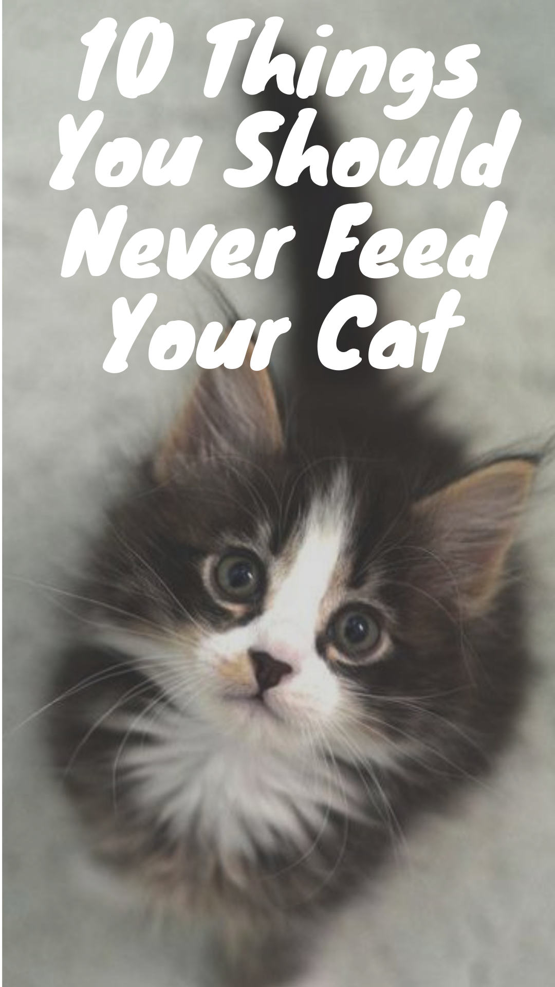 10 Things You Should Never Feed Your Cat With Images Funny Cats Cat Area Cat Safety