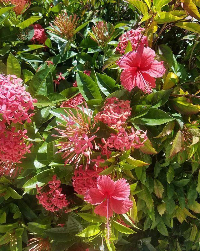Things that make me smile! #nature #godsgift #islandting
