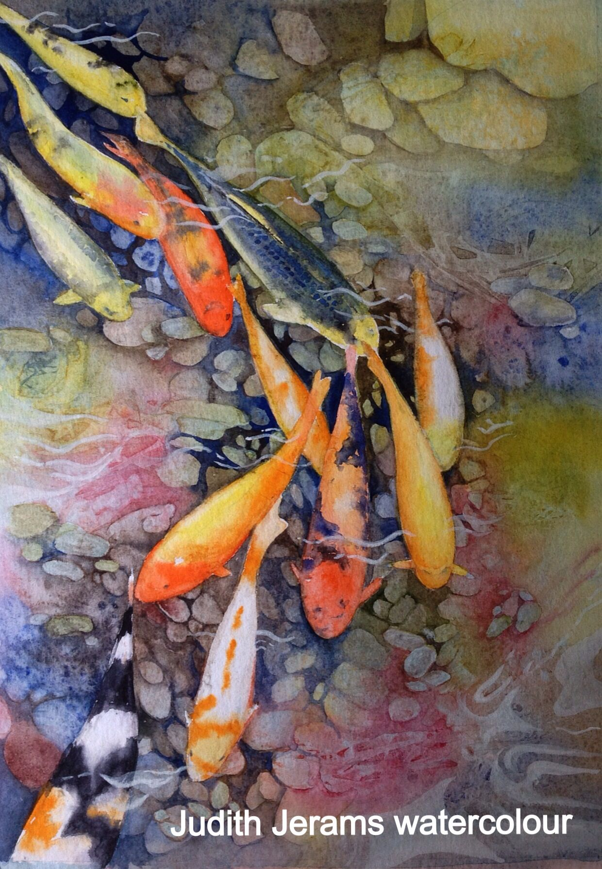 Beautiful koi carp watercolour by artist judith jerams for Fish out of water watercolor