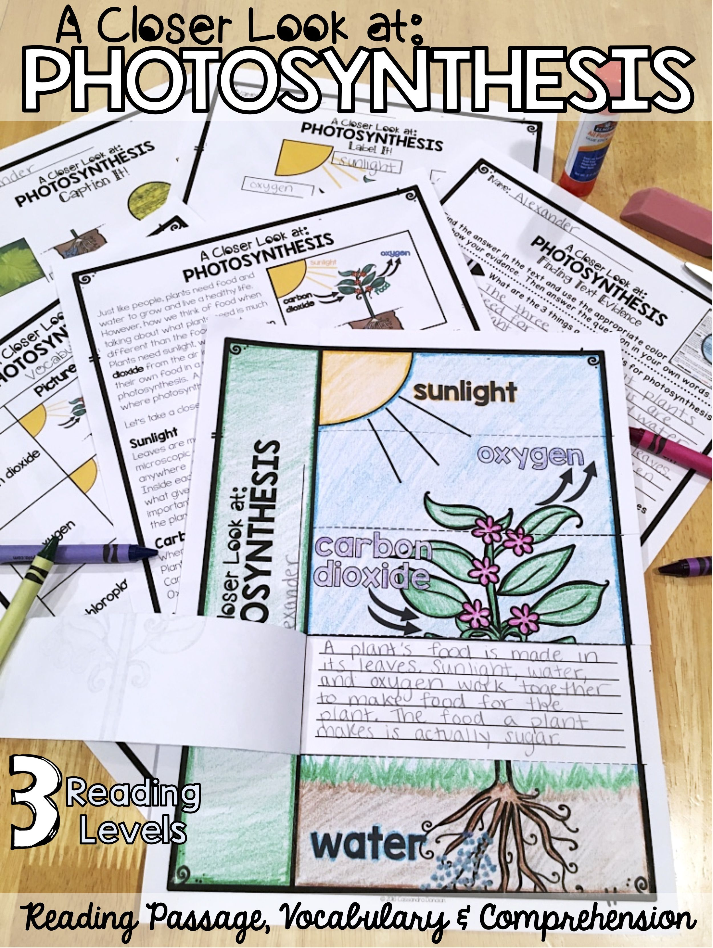 Differentiated Reading Passages Vocabulary Comprehension Everything You Need To Te Photosynthesis Activities Photosynthesis Reading Comprehension Passages [ 3325 x 2500 Pixel ]