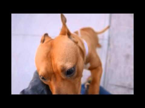 CRASH – A1038268 | Help us Save NYC AC&C Shelter Dogs