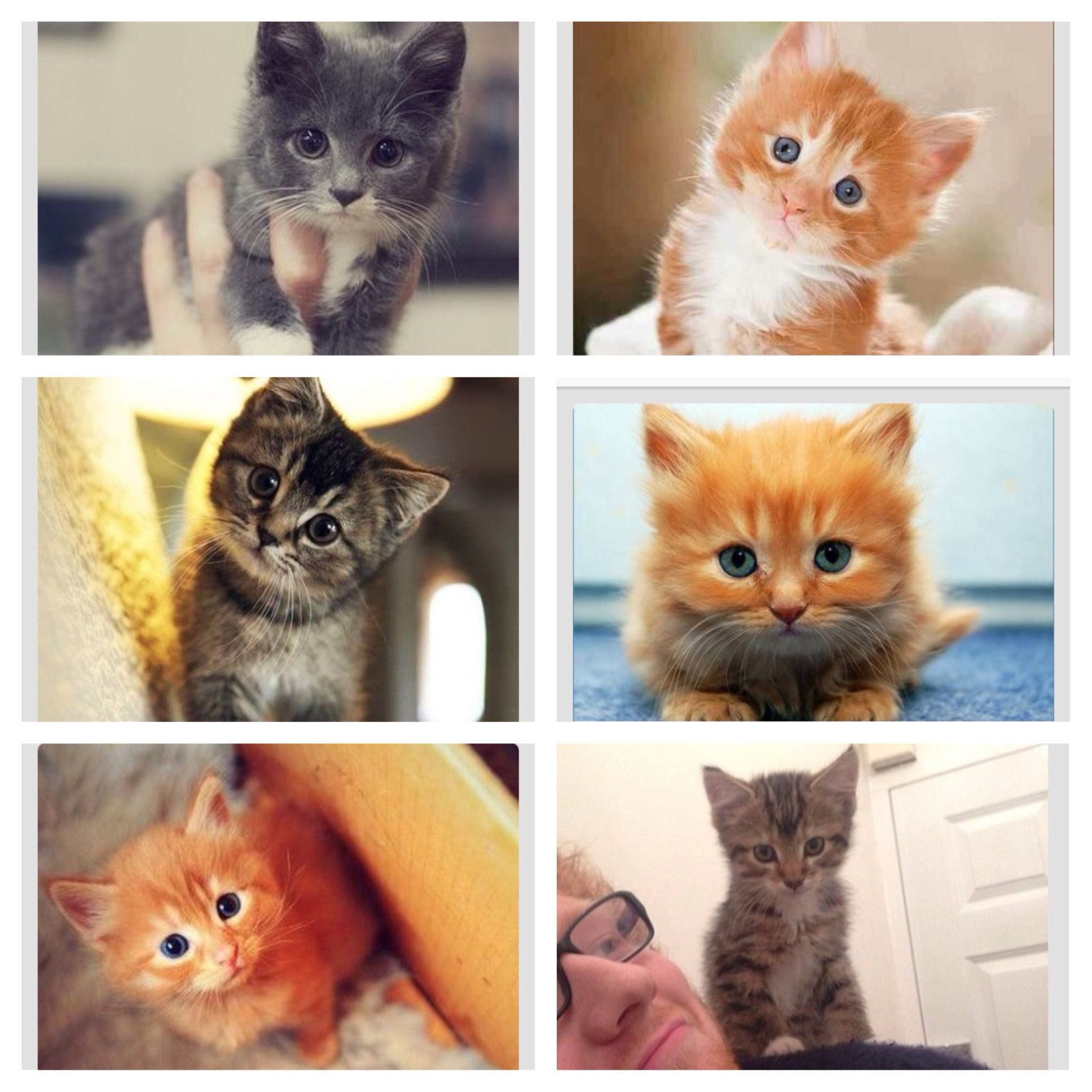Can you tell I want a kitten?!?!?