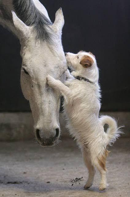 Proof That Horses And Dogs Make The Best Of Friends Animals Friendship Cute Animals Animals Beautiful