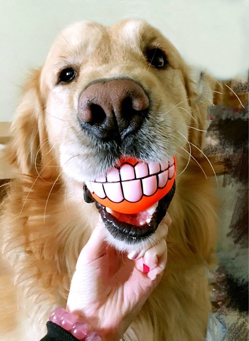 Pet Supplies Dog Squeaky Toys Funny And Cute Bucktooth Dog Toy