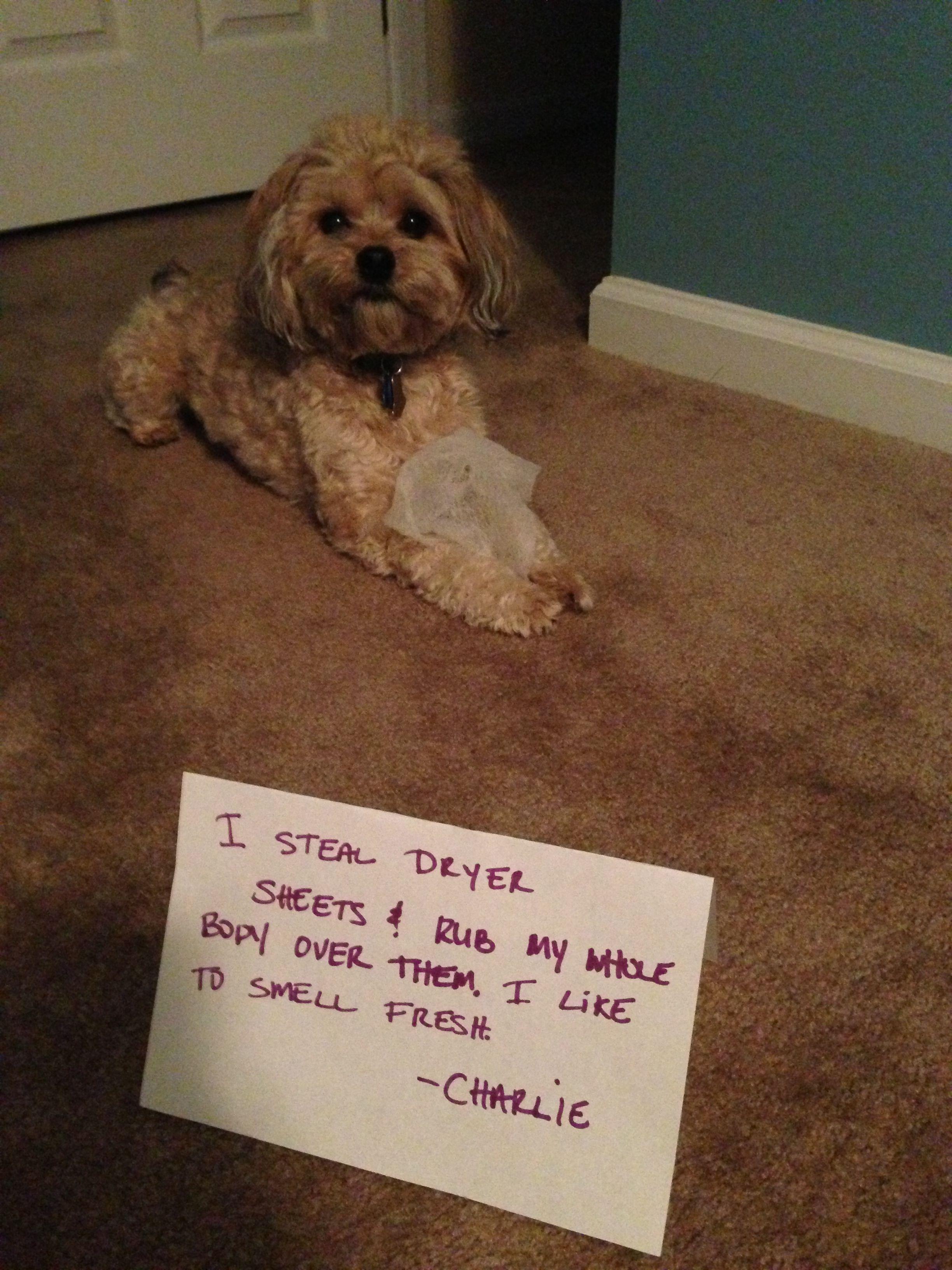 So Fresh So Clean Dog Shaming Funny Funny Dog Memes Dog Shaming