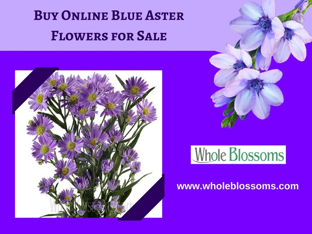 If you want to buy online blue aster flowers for sale then you can if you want to buy online blue aster flowers for sale then you can visit whole blossoms which is the best online flower shop where you can get fresh and izmirmasajfo Image collections