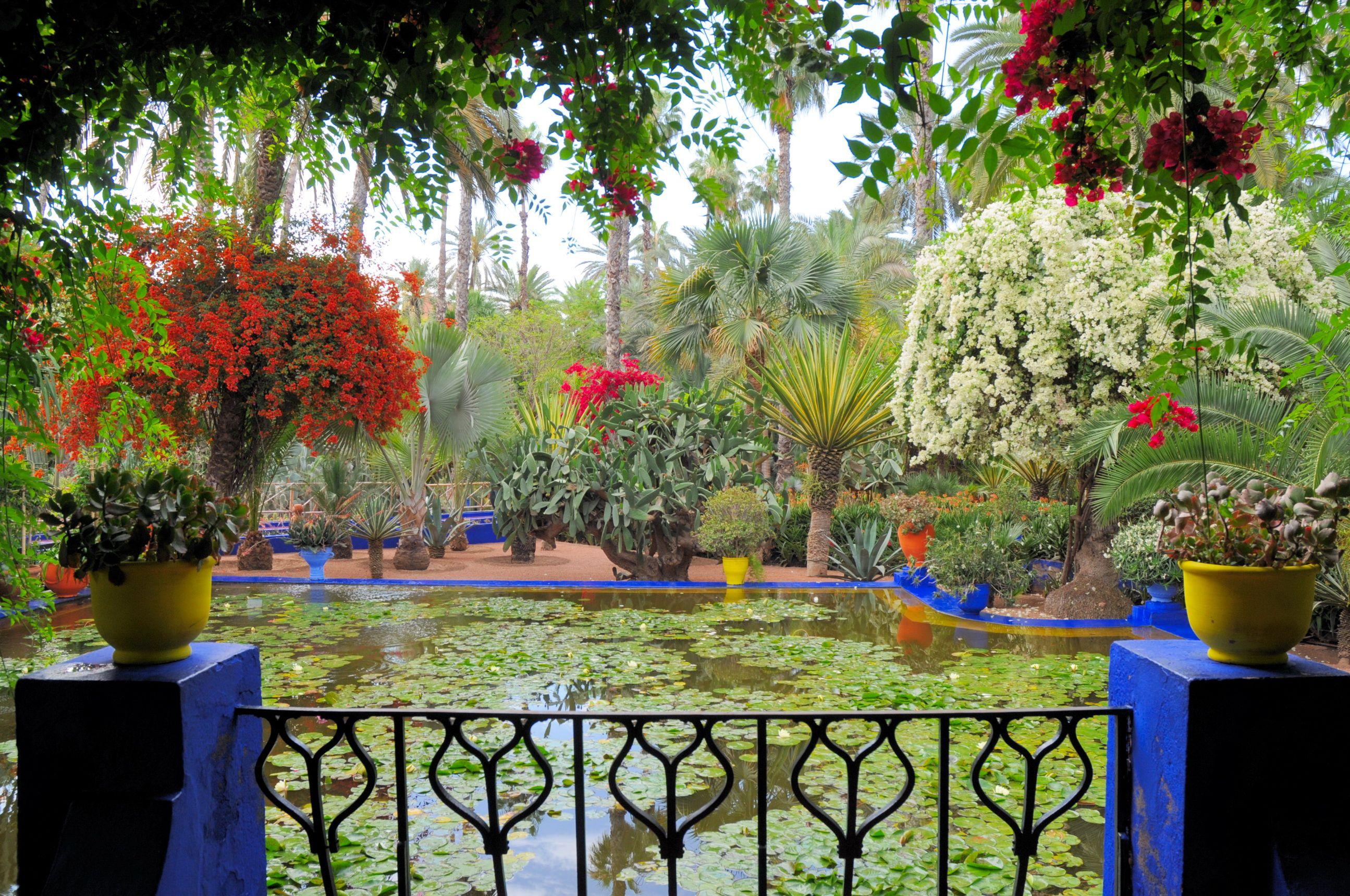 """Résultat de recherche d'images pour """"le jardin majorelle a marrakech"""""""