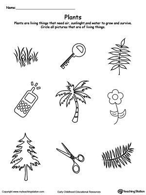 Understand Living Things Plants Sorting Categorizing Worksheets