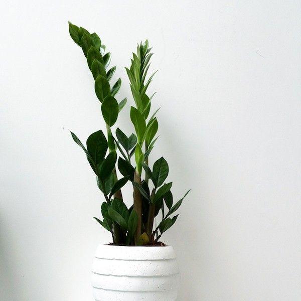 zimmerpflanzen die auch im dunklen bad gut gedeihen zimmerpflanzen f r lichtarmes bad pinterest. Black Bedroom Furniture Sets. Home Design Ideas