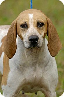 Johnson City Tn Hound Unknown Type Meet Pebbles A Dog For