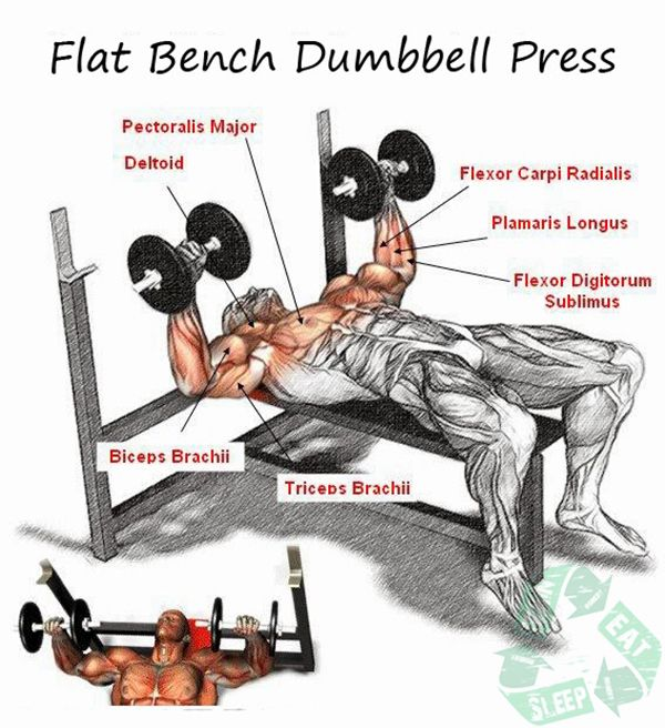 Dumbbell Chest Workouts For Men: Chest Workout Triceps Bicep