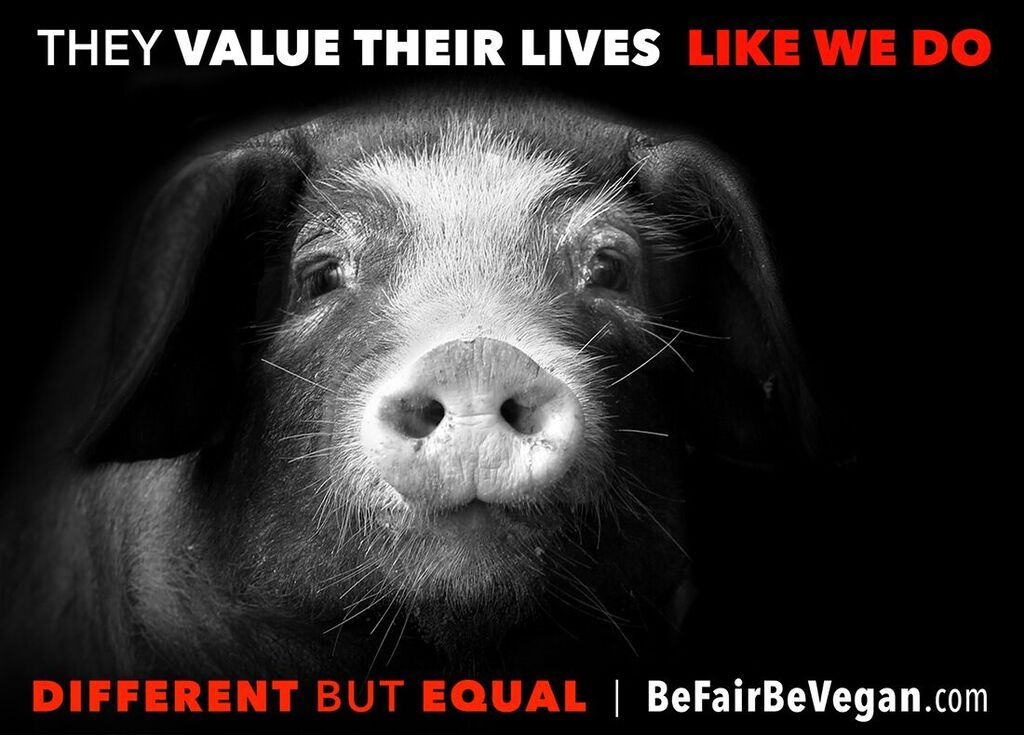 Image result for pictures of animal justice
