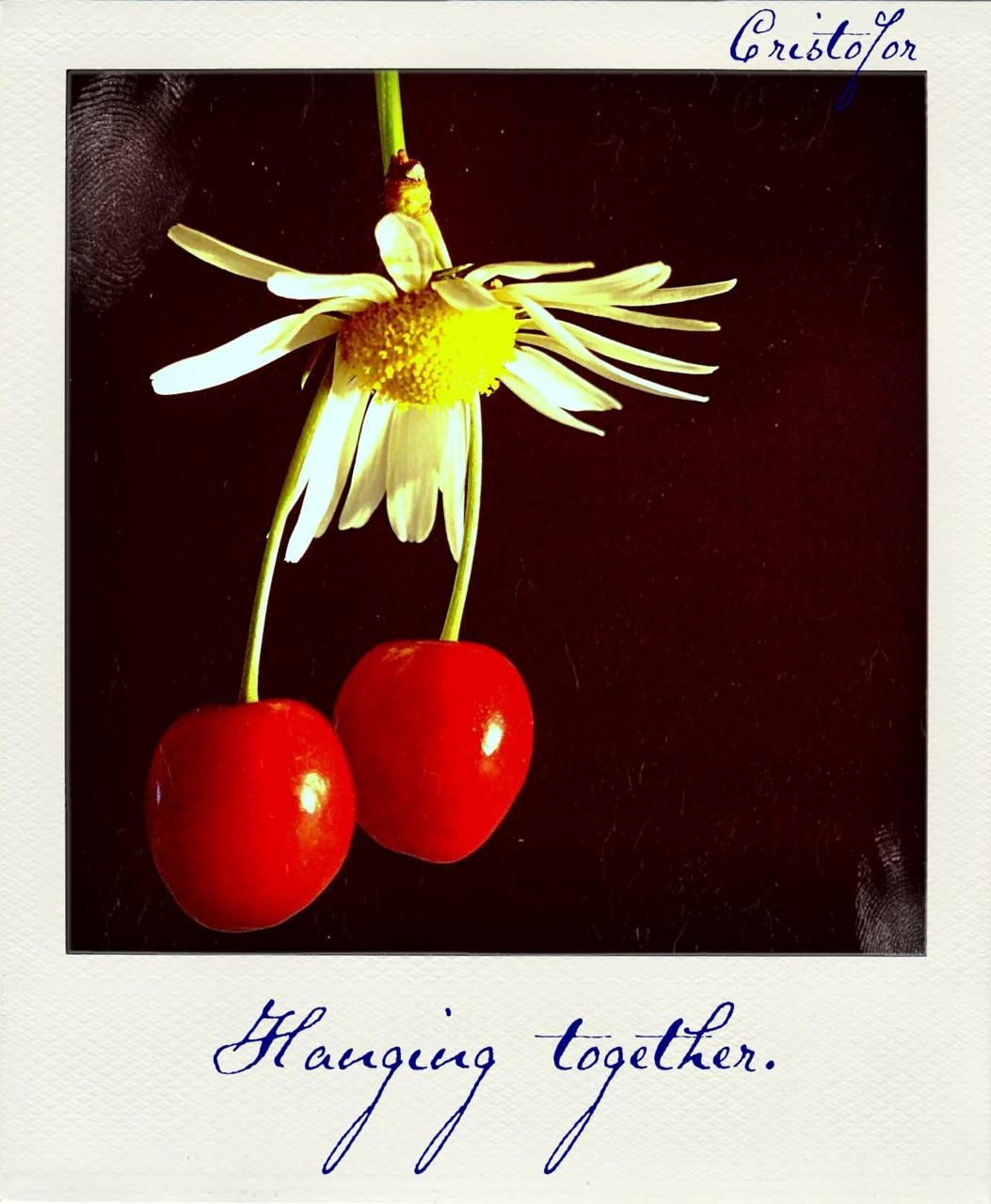Polaroid.  Cherries are loveable.