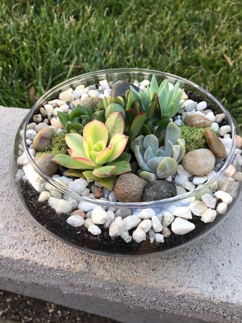 Glass Terrarium bowl with succulents, KIT to make terrarium, DIY kit to make your own terrarium, succulents, terrarium, living gift