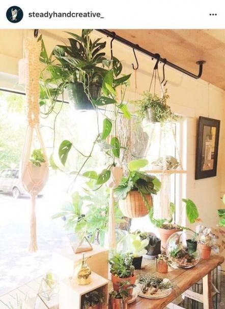 Best Plants Indoor Inspiration Sunrooms Ideas House Plants Hanging Window Plants House Plants Indoor