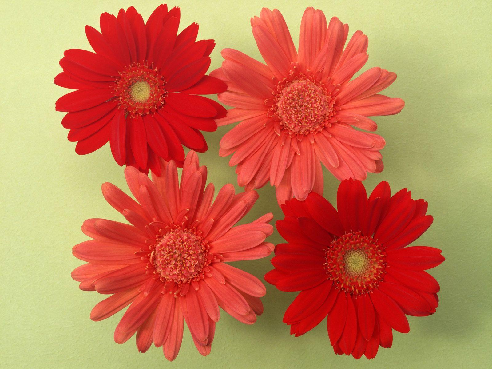 Beautiful flowers free download wallpaper 1200x1600g 16001200 beautiful flowers free download wallpaper 1200x1600g 16001200 izmirmasajfo