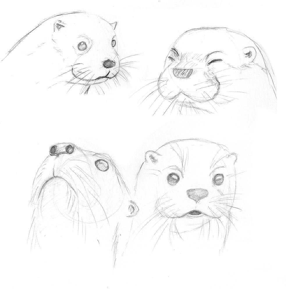 Kept At Practicing Otters Really Like These Guys Also They Start To More Look Like I Envisioned Them Art Drawing Artwork Pract Animal Drawings Sketches Drawings