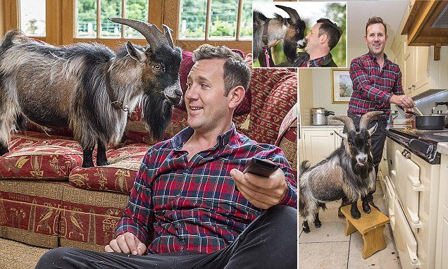 A goat for a pet? You must be kidding: 50,000 Brits keep them as pets