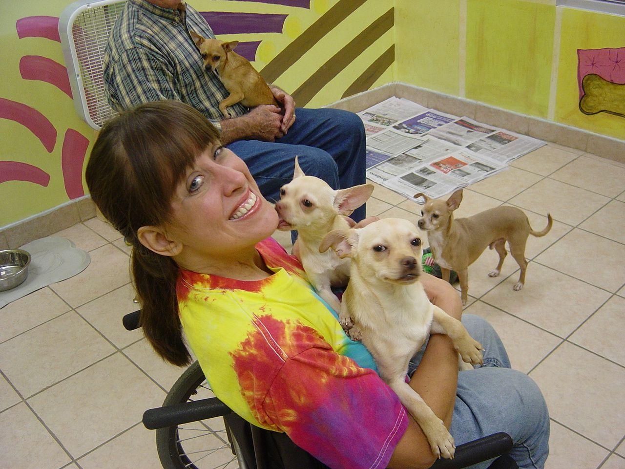 Chihuahua S Ready Christmas At The Birmingham Humane Society