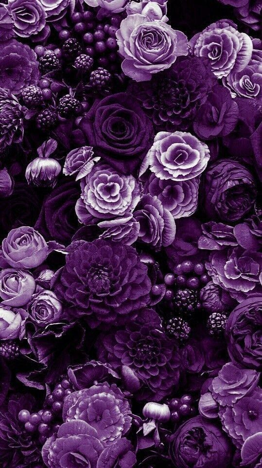 Purple flowers, #flowers #Purple#flowers #purple    Summer is the most colourful… - Modern