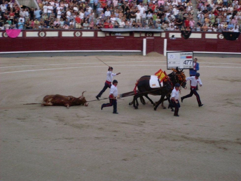 venta de toros | FOTOS DE Plaza de Toros de Las Ventas
