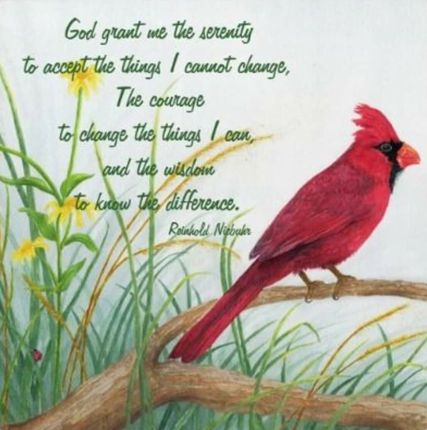 Pin By Wilma Stevens On Angels Pinterest Cardinals Bird And