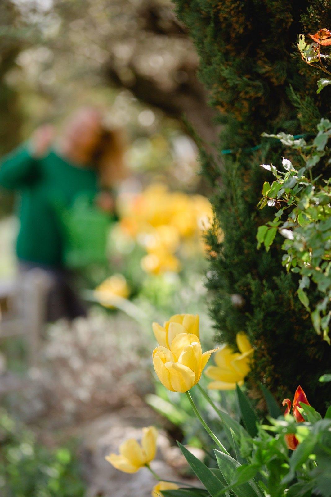 Tausende Tulpen wurden im Herbst gesetzt bald blühen Sie