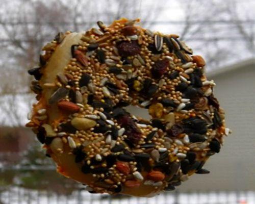 homemade bird treats - Google Search