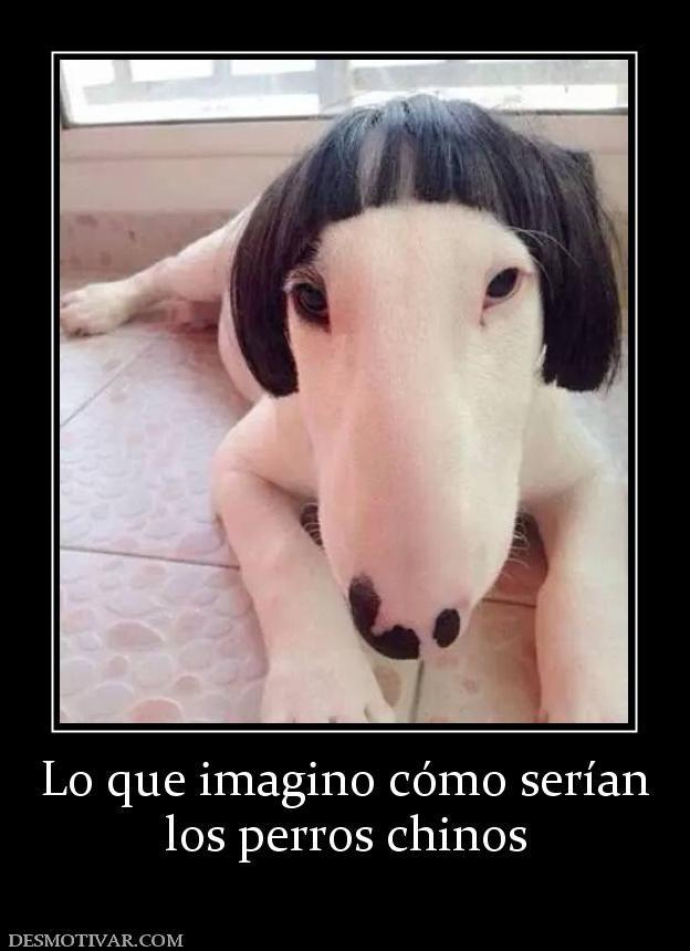 Lo Que Imagino Como Serian Los Perros Chinos Memes Animal Memes Cute Funny Animals