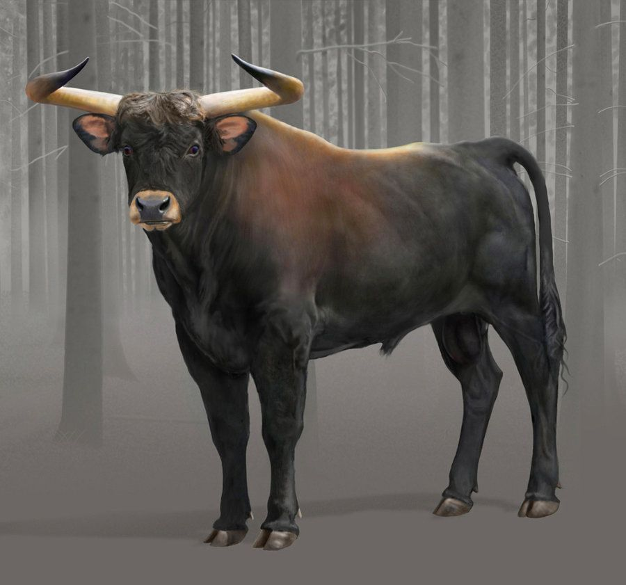 in case anyone is wondering what an aurochs is it s the wild