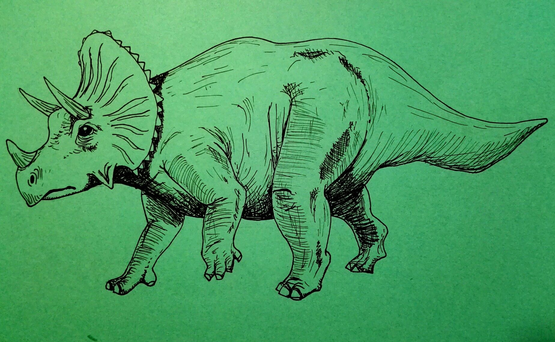 Triceratops dibujo blanco y negro b&w ILUSTRACIONES