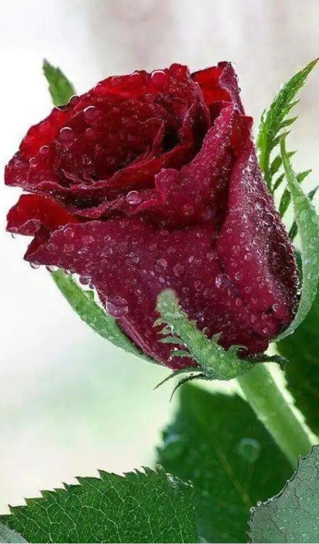 Épinglé par Анатолий sur Магия цветов. Fleurs, Fleur