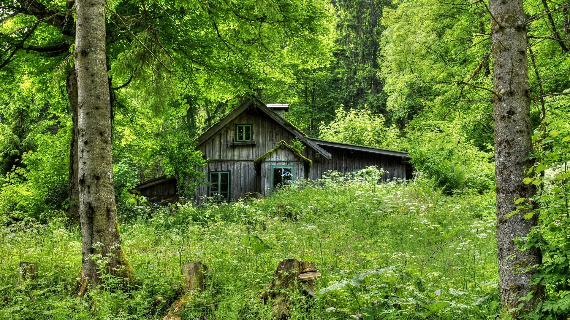Cabin Deep In The Woods Hd Desktop Background Wallpapers Hd Free Forest House House In The Woods Cabin