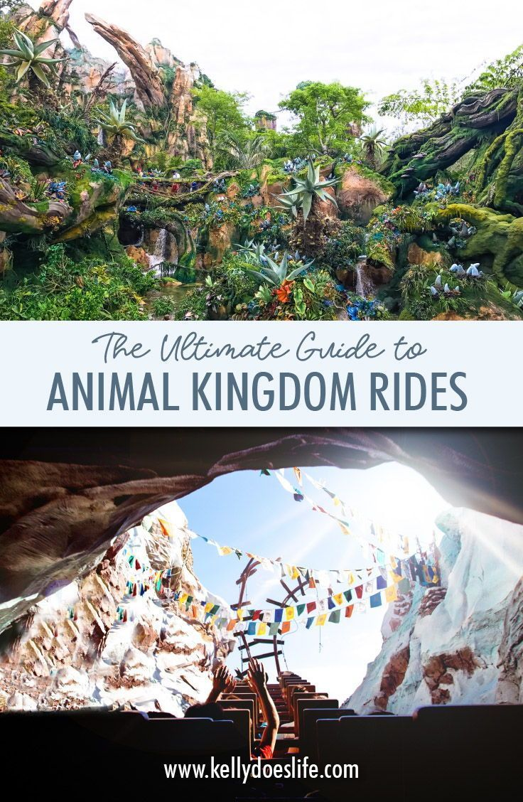Complete Guide to Animal Kingdom Rides - Everything You Need to Know! #animalkingdom