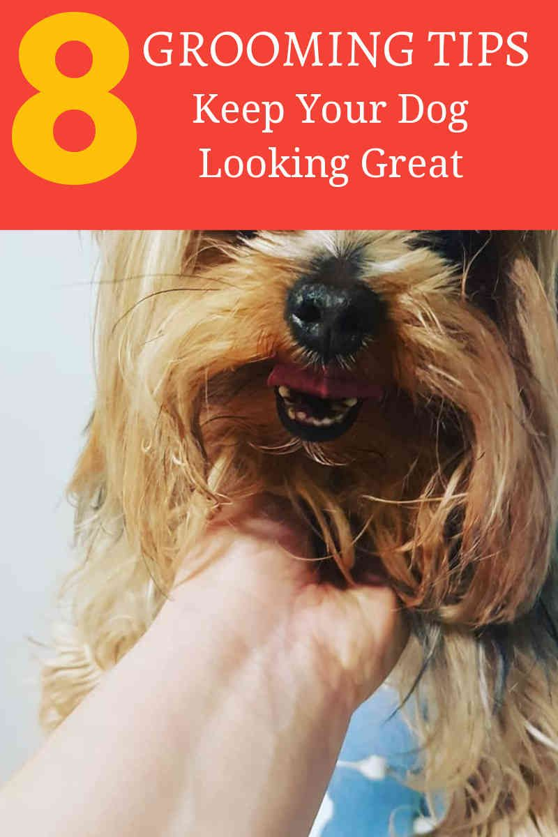 Learning How To Groom A Dog Online And Easy Dogscorner Dog Grooming Tips Dog Grooming Dog Care Tips