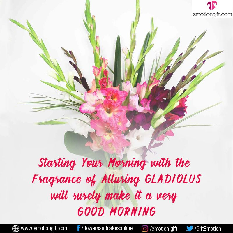 A Gift To Make Your Loved One S Morning Perfect Only From Www Emotiongift Com Morning Flower Bunchofflowers G Gladiolus Bouquet Gladiolus Flower Delivery