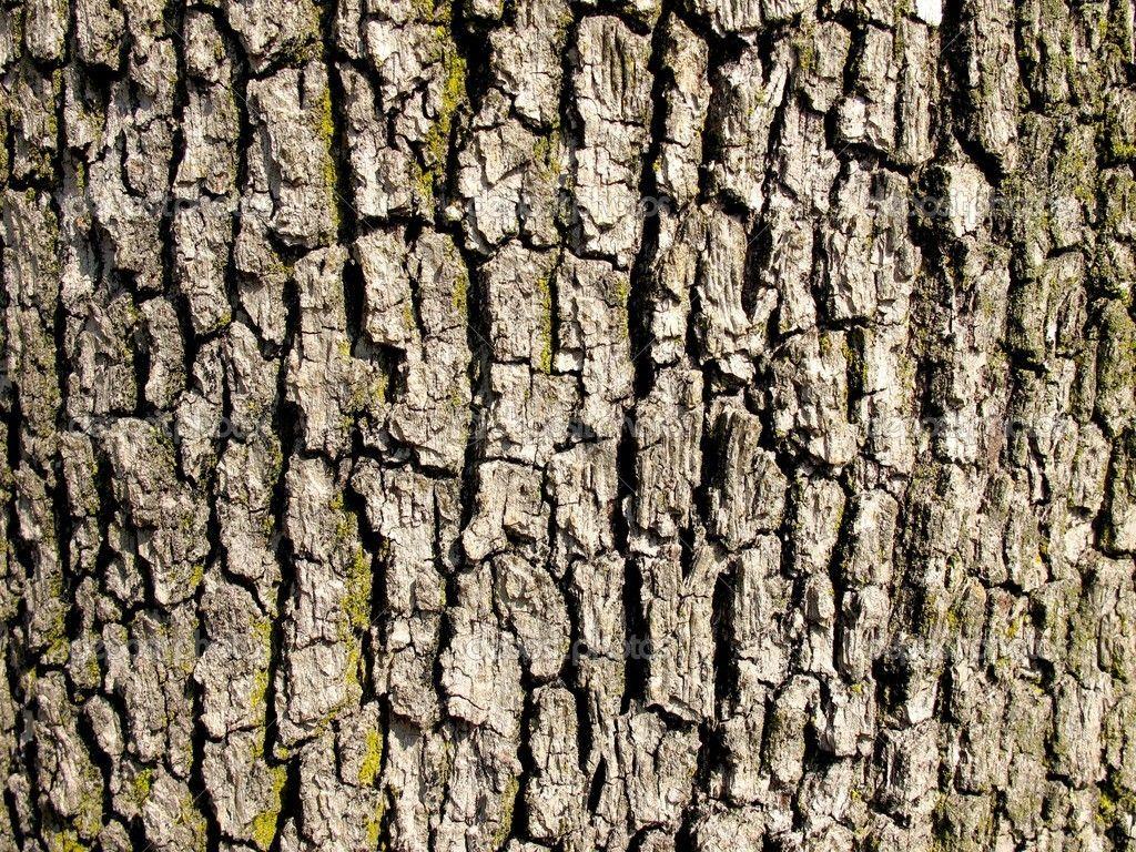 Bark Of A Old Oak Tree Texture