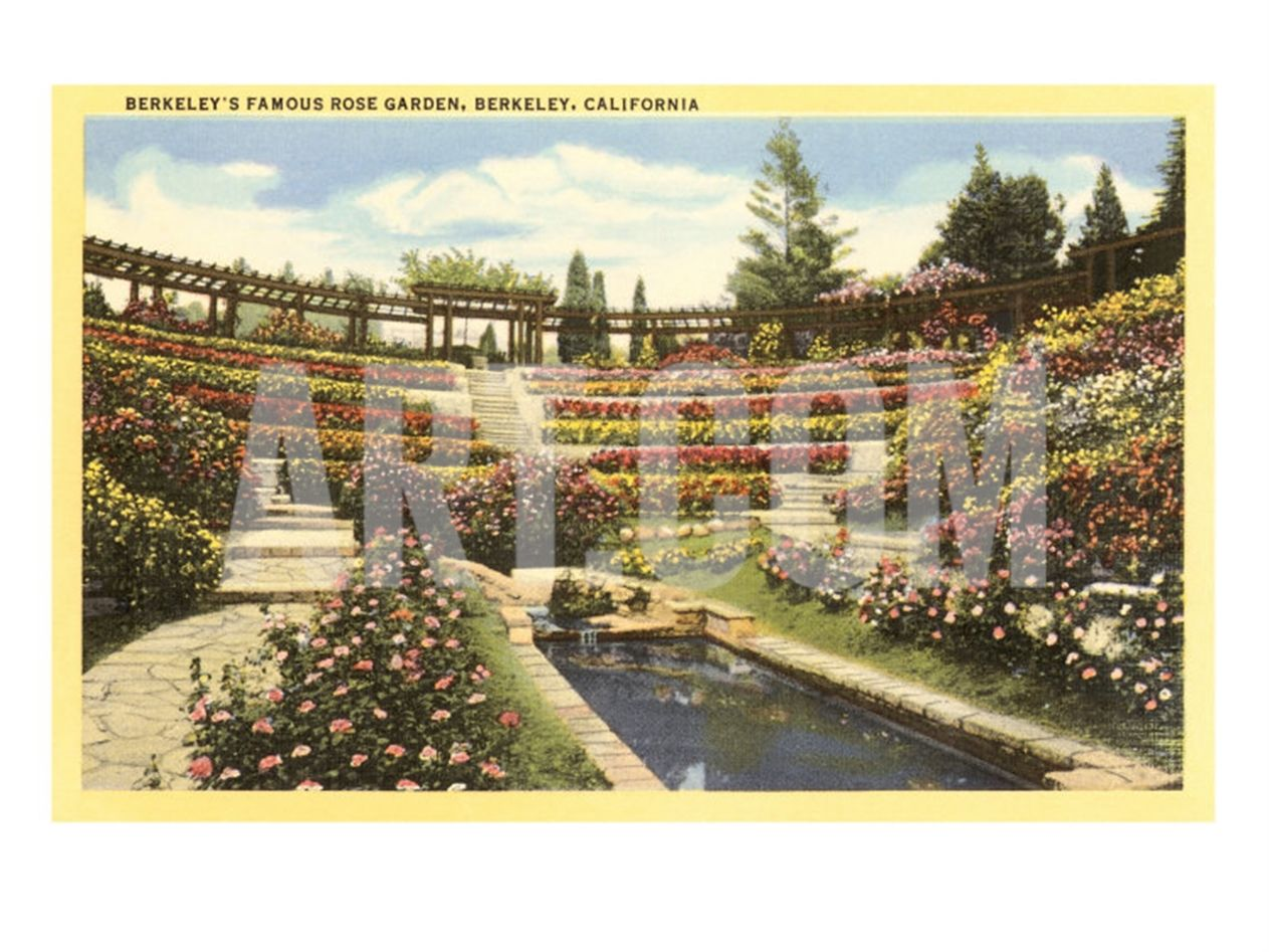 Rose Garden, Berkeley, California Giclee Print at Art.com | Scenes ...