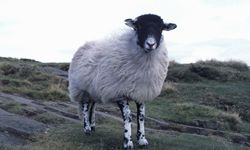 How does wool keep you warm even when it's wet?