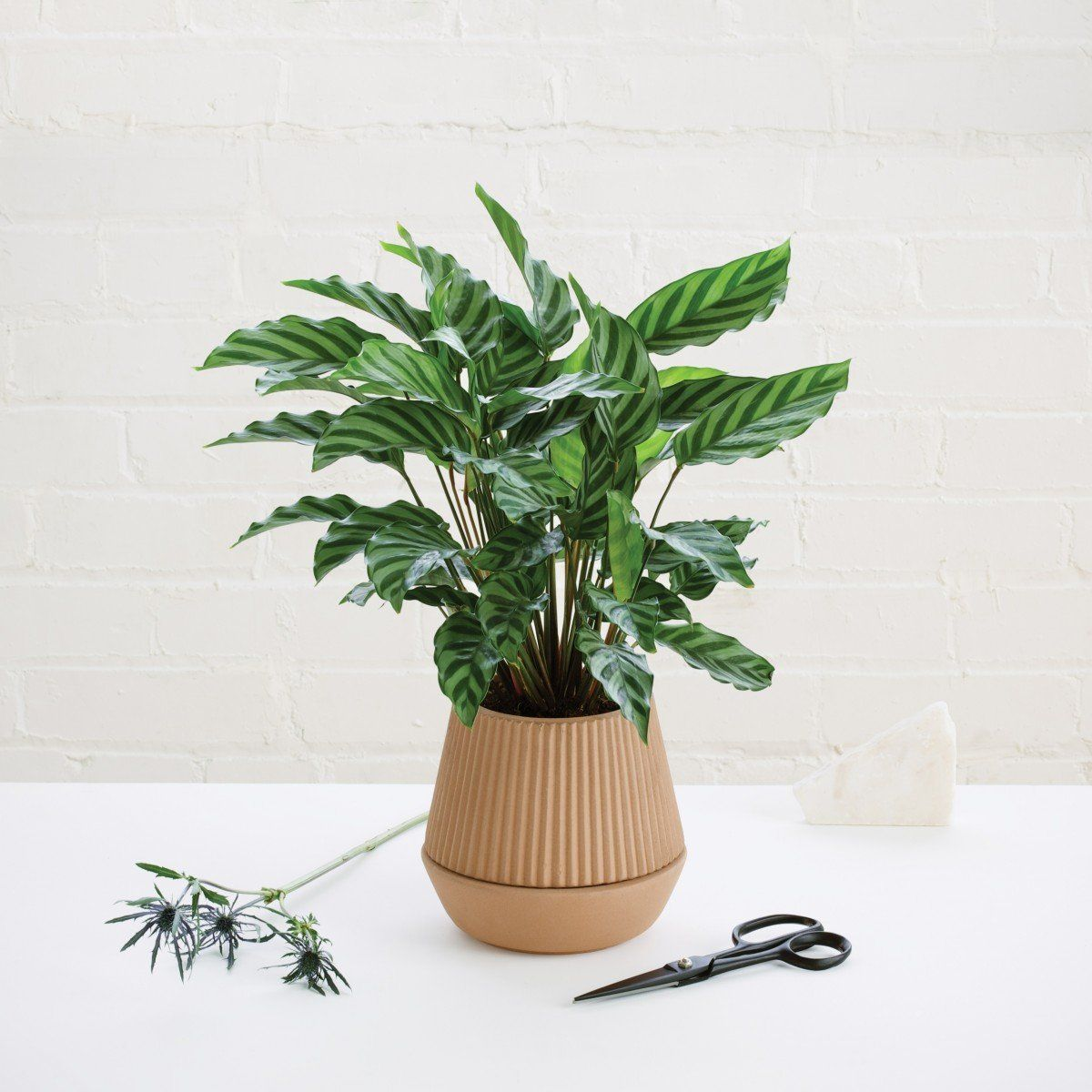 Pleated Earthenware Planter by Umbra Shift #selfwatering